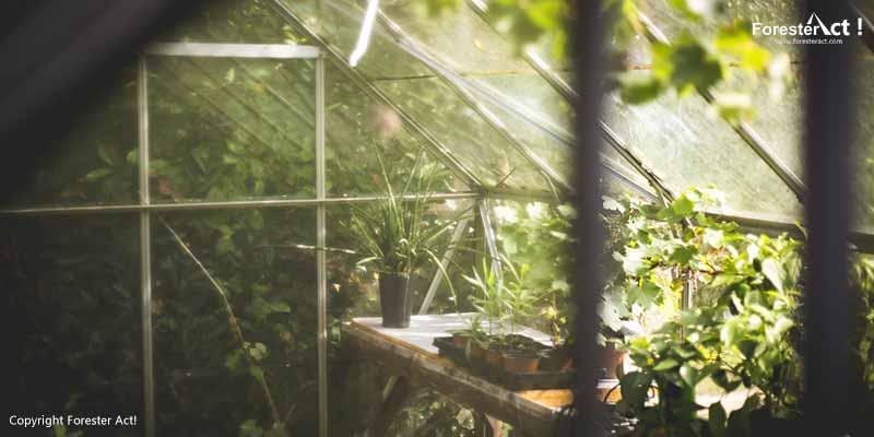 Analogi greenhouse sebagai prinsip efek rumah kaca