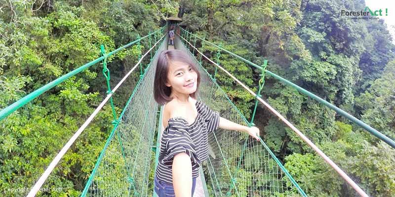 Canopy Trail di Cibodas sebagai Spot Wisata Alam Keren