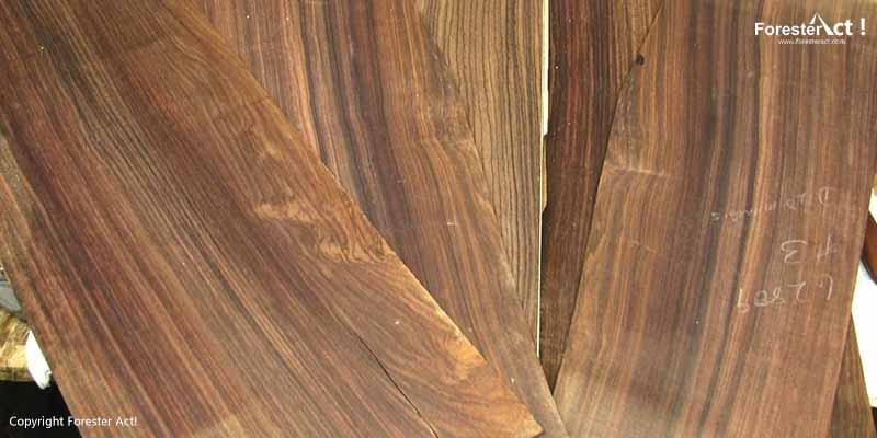 Kayu Mewah dan Indah dari Pohon Sonokeling