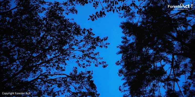 Tutupan Tajuk di Hutan Hujan Tropis