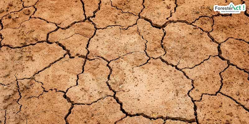 Contoh lahan kritis akibat kekeringan