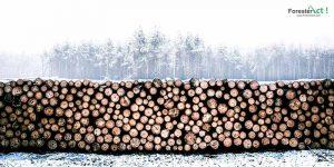Log Hasil Hutan Tanaman Industri