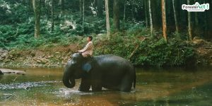 Gajah Sumatera (instagram.com)