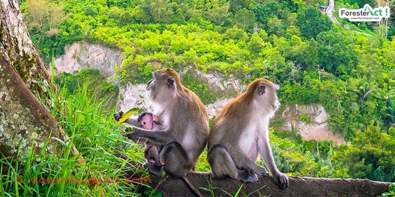 Monyet Ekor Panjang di Ngarai Sianok (instagram.com)
