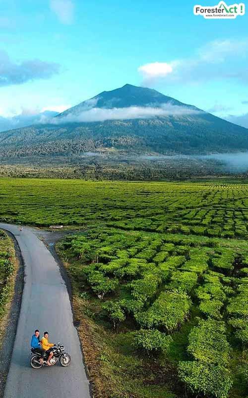 Pemandangan Kebun Teh Kayu Aro (instagram.com)
