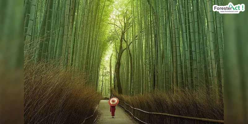 Bambu (pinterest.com)