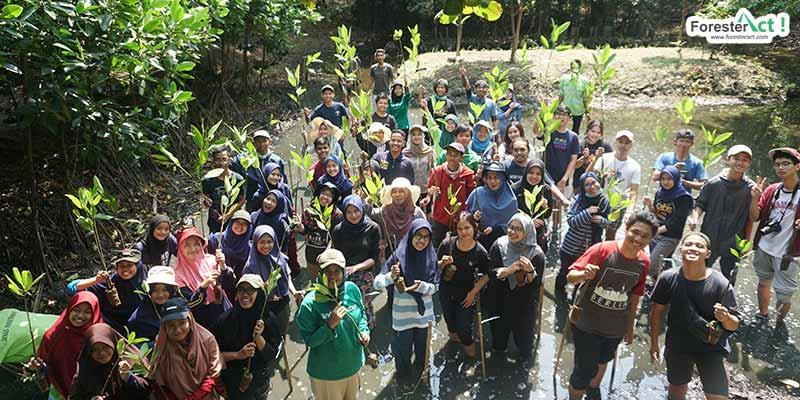 Ketapel Mangrove