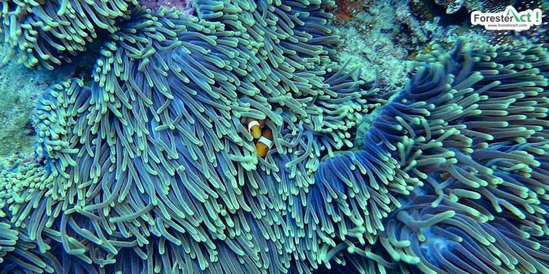 Tempat Tinggal Ikan-ikan (pixabay.com)