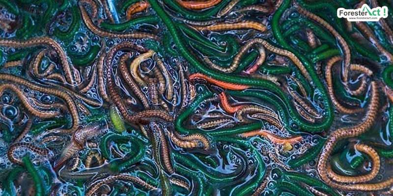 Cacing Laut atau Nyale (instagram.com)