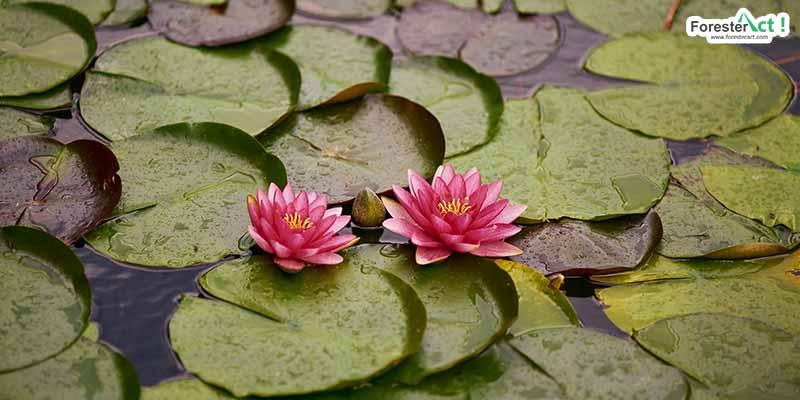Adaptasi tumbuhan air (pixabay.com)