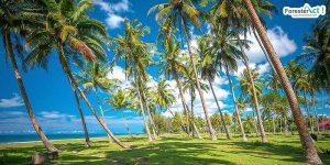 Pohon Kelapa Pantai Katapiang