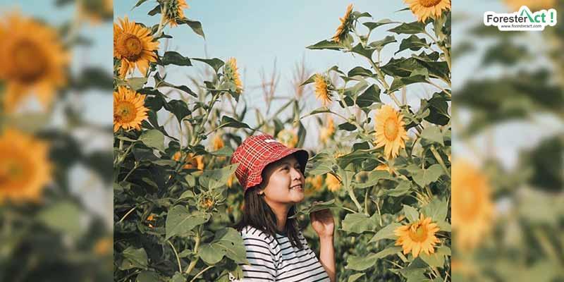 Taman Bunga Matahari (instagram.com)