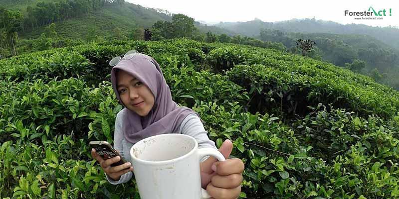 Kebun Teh Gunung Gambir (instagram.com)