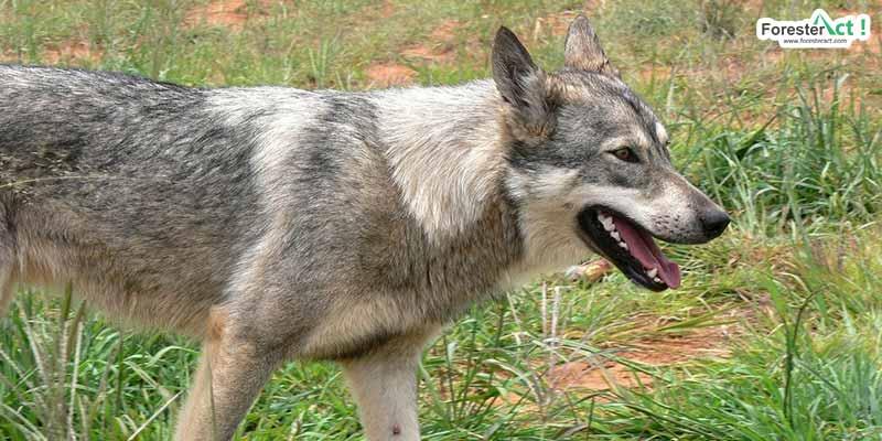 Anjing sebagai penular rabies (instagram.com)