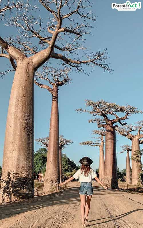 Baobab Tree (instagram.com)