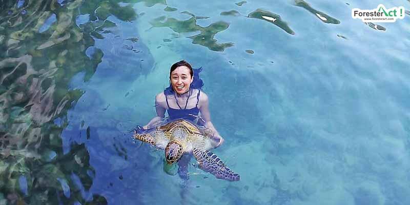 Konservasi Penyu di Pulau Liukang Loe (instagram.com)