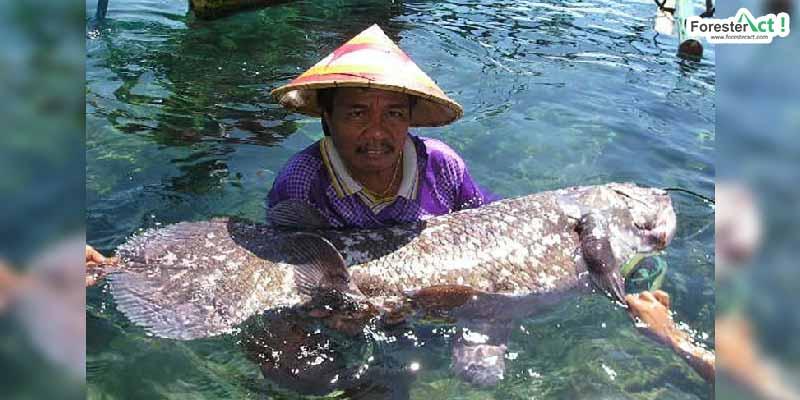 Penemuan ikan Coelacanth