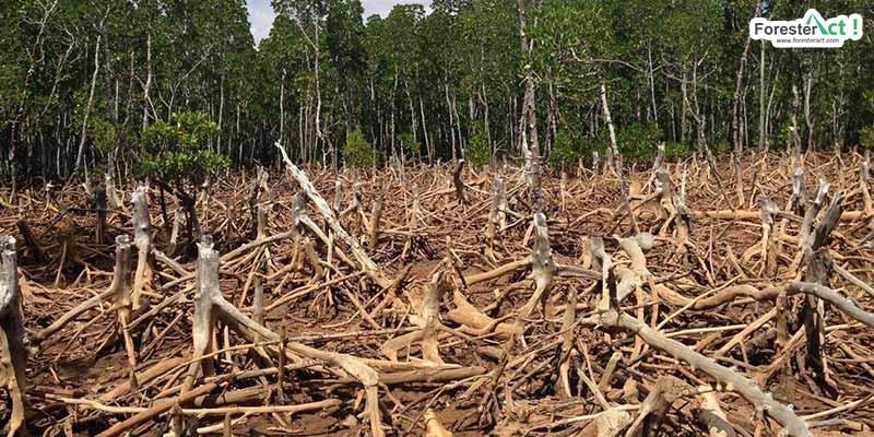 Deforestasi (pinterest.com)