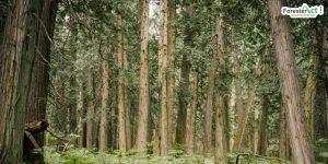 Ilustrasi hutan primer (pinterest.com)