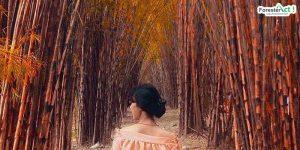 Hutan Bambu Keputih (pinterest.com)