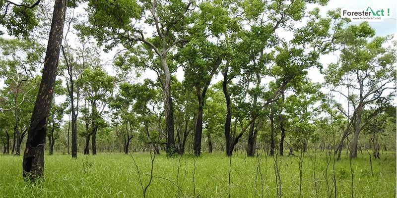 Rumput hijau yang tumbuh setelah lahan dibakar untuk mengundang hewan buruan (Diambil oleh Siti Hudaiyah)