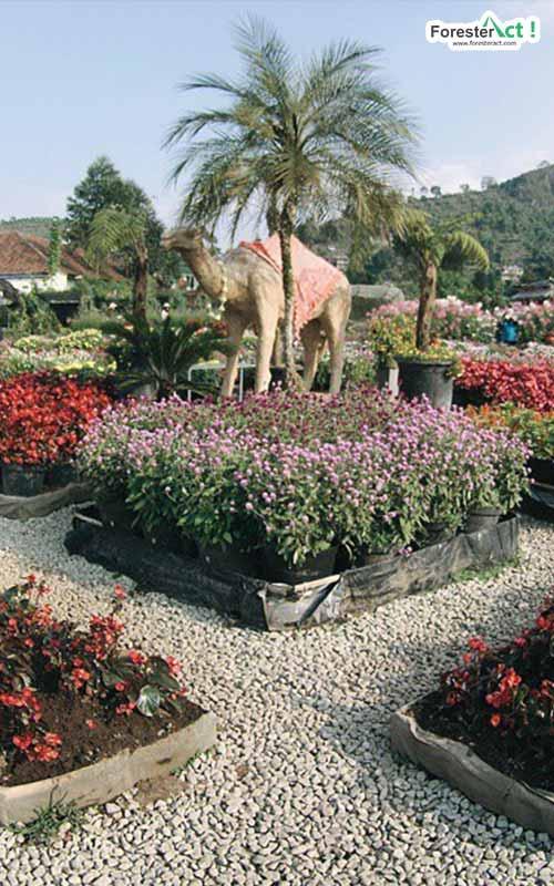 Berlibur ke Taman Begonia (instagram.com)