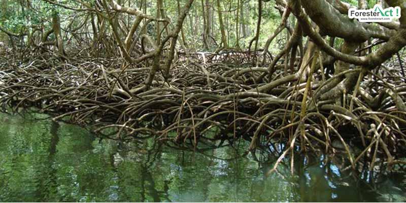 Hutan Mangrove (pinterest.com)
