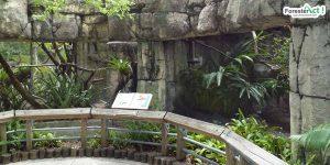 Ilustrasi Kebun Binatang (pinterest.com)