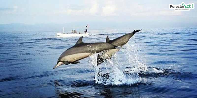 Lumba-lumba di Pantai Lovina (instagram.com)