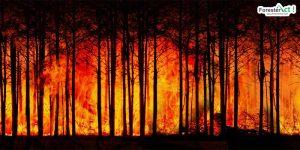 Peranan dan fungsi hutan yang hilang bagi kemantapan iklim bumi