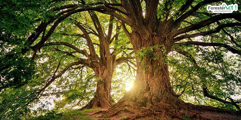 Pohon (pixabay.com)