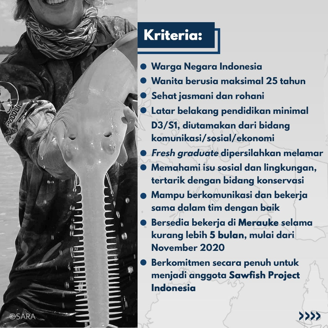 Sawfish project Indonesia look for a new member 2