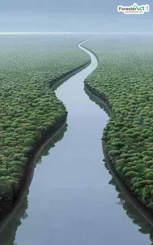 Sungai Amazon (pinterest.com)