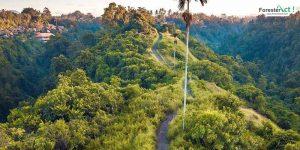 Campuhan Ridge Walk (instagram.com)