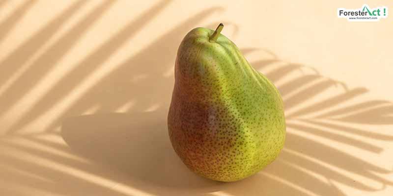 Pear (pexels.com)