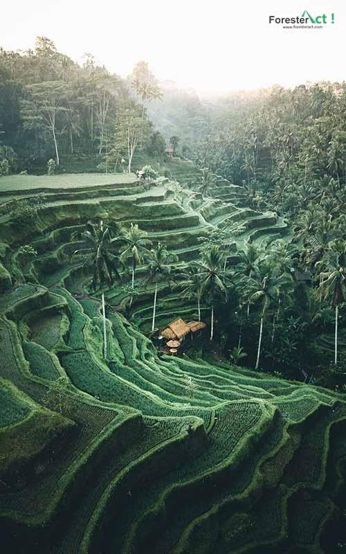 Pemandangan Terasering Tegallalang (instagram.com)