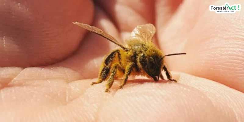 Lebah (pinterest.com)