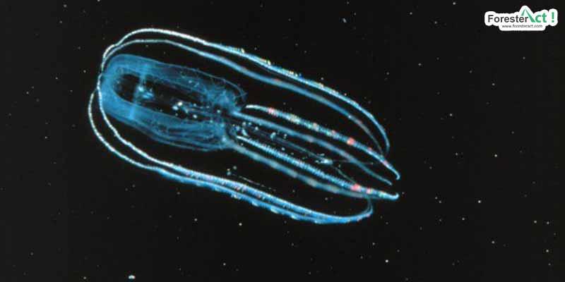 Plankton (pinterest.com)
