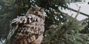Keunikan Kepala Burung Hantu (pexels.com)