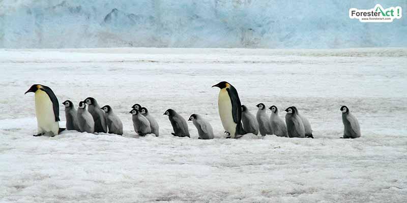 Penguin di Kutub (pixabay.com)
