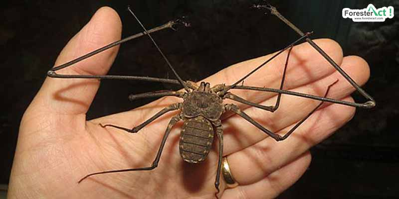 Tailles Whip Scorpion